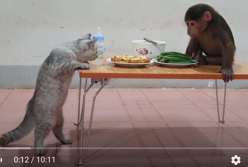 обезьянка Ду и кот Мин